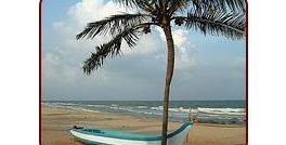 Covelong Beach Palm Trees