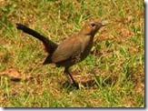 bird in pocharam wildlife sanctuary
