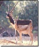 pranhita wild life sanctuary