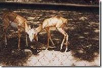 rajiv gandhi wild life sanctuary2