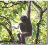 rajiv gandhi wild life sanctuary4