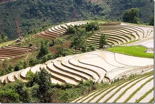 Sa-pa-Terraces-Vietnam