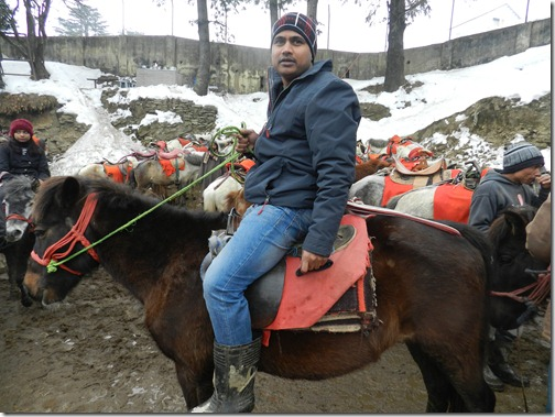 Horse-Ride-in-Kufri-Simla