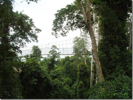 800px-Kakum_National_Park,_Ghana